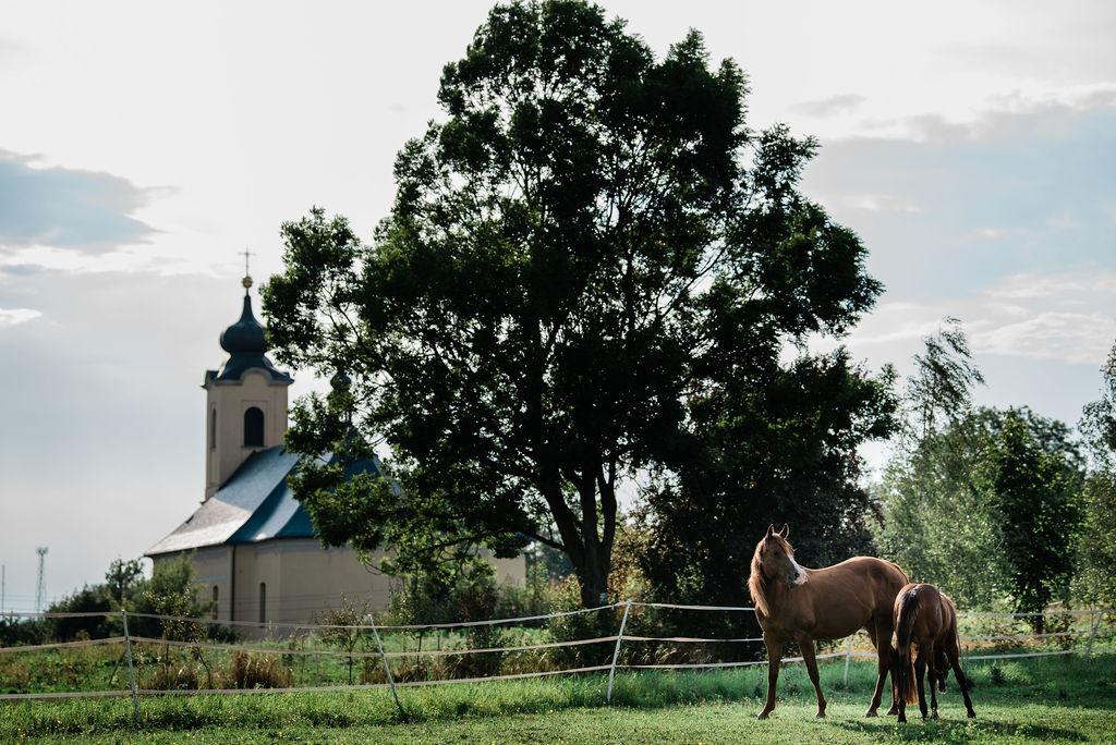 Bujnoch Ranch – výběh hříbě